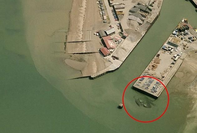 В сети появились фото 15-метрового краба у берегов Англии