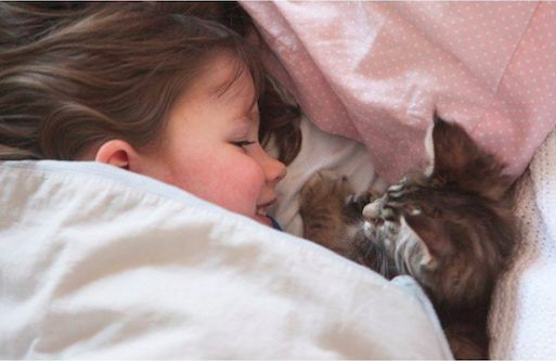 Кот помогает девочке-аутисту