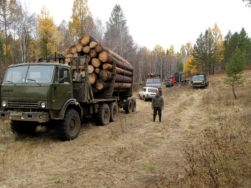 В Иркутской области «черные лесорубы» получили по 4-5 лет условно