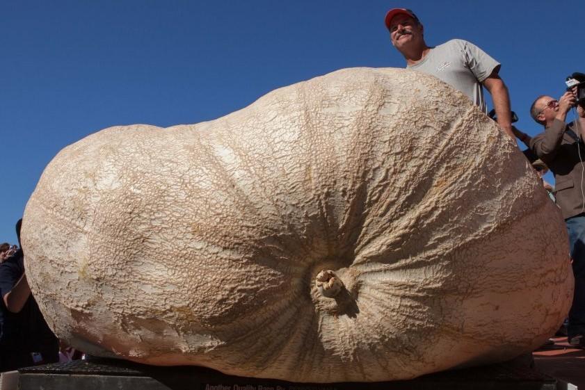 В Калифорнии выращена одна из самых больших в мире тыкв
