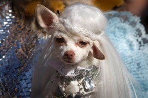 A dog poses for a photo dressed as Daenerys Targaryen from Game of Thrones during the  24th Annual Tompkins Square Halloween Dog Parade in New York