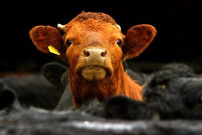 McDonald's признался в использовании гормонов в мясе