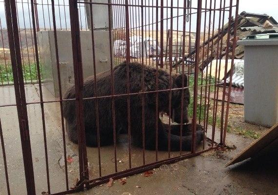 Дрессировщика сократили из цирка вместе с медведями
