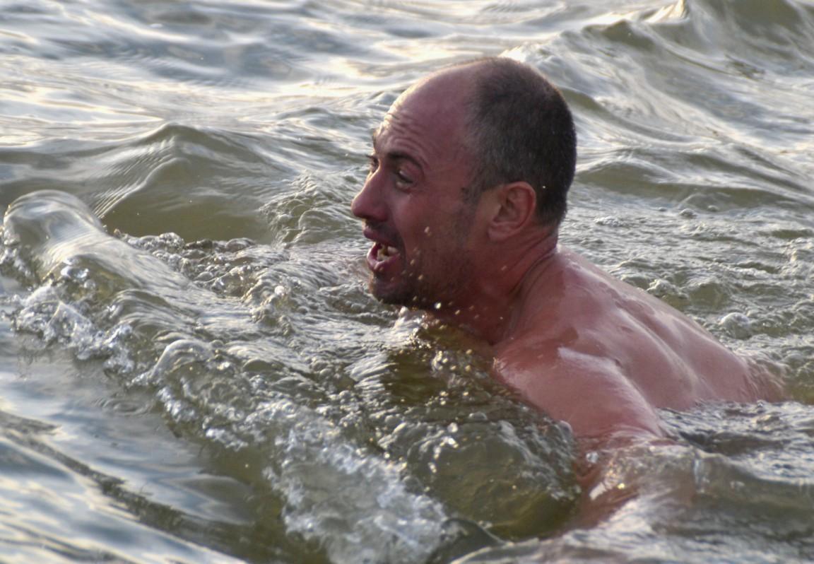 В качестве поздравления Путина с Днем рождения морж переплыл Обь