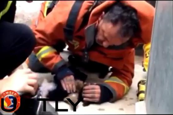 Испанский пожарный реанимировал щенка с помощью искусственного дыхания