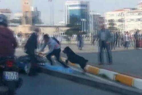 В Турции собака разняла драку между таксистом и мотоциклистом