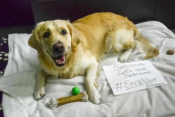 Интернет-пользователи выступают против усыпления собаки испанской медсестры, больной Эбола