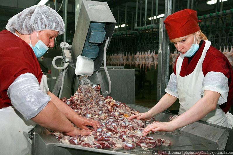 Россия расширила список товаров, запрещенных для экспорта из стран ЕС