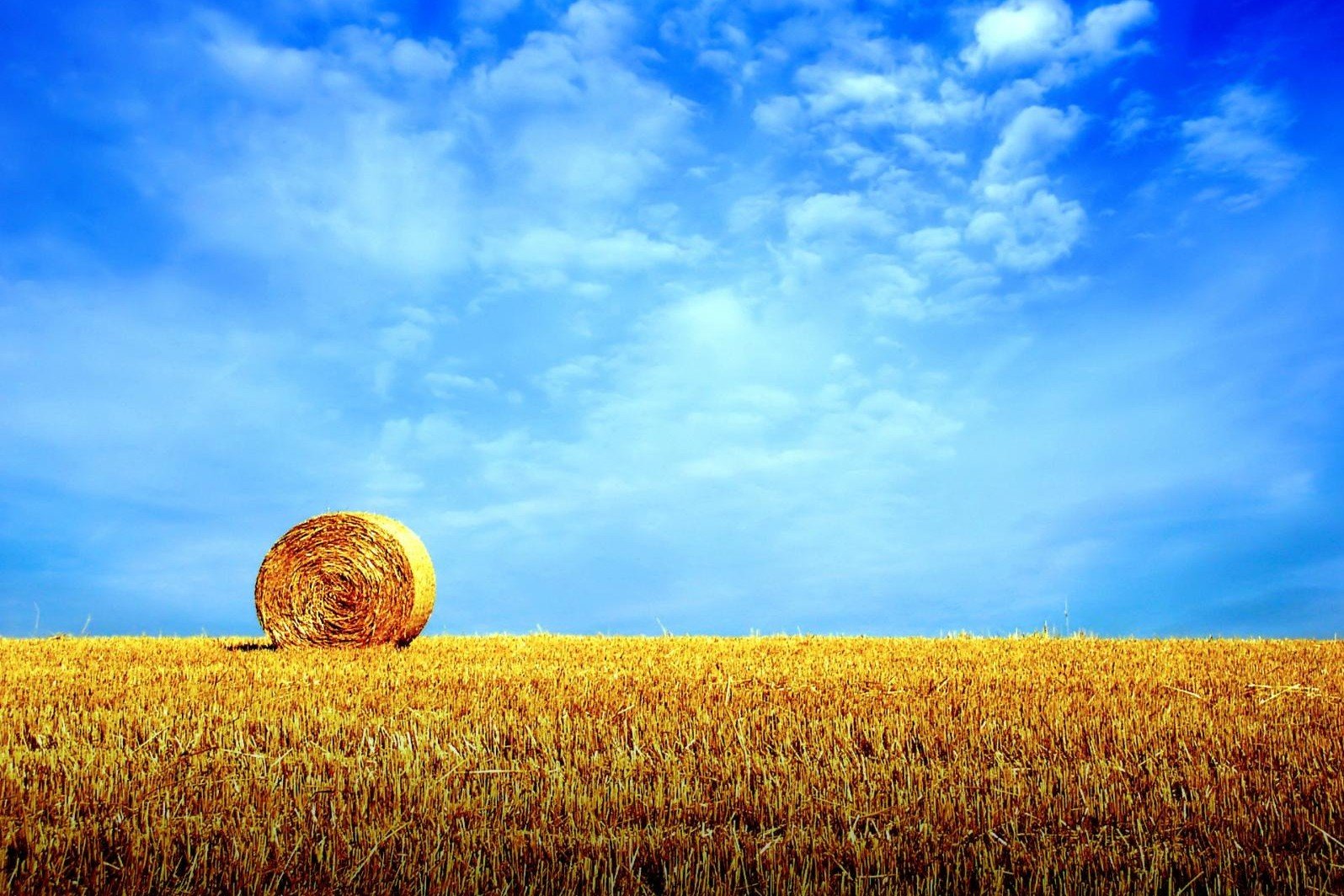 Россельхознадзор запретил ввоз из Украины всей растительной продукции