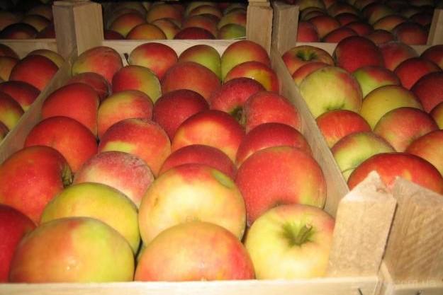Польские яблоки пытались