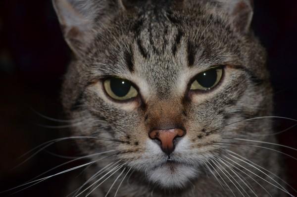 Кошка оставила без света 26 тысяч человек в Симферополе