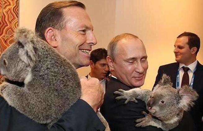 Путин и коала набирают популярность в Интернете