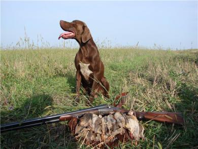 Собака застрелила охотника в Псковской области
