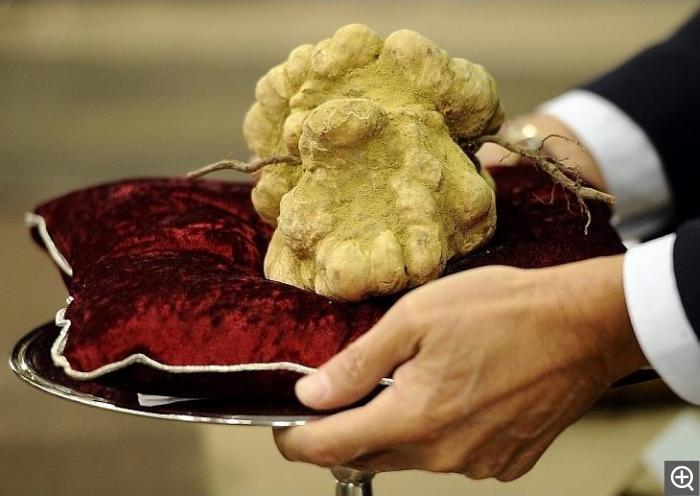В США продали самый большой трюфель за 61 тыс. долларов