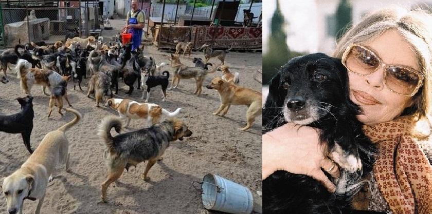 Известный воронежский зоозащитник обратился к Брижит Бардо