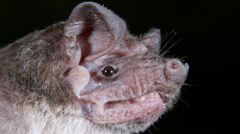 И все-таки мыши: ученые из ВОЗ раскрыли самую правдивую версию появления коронавируса