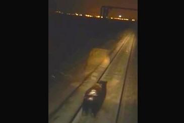 Медведь, на которого наехал поезд в Норильске, жив