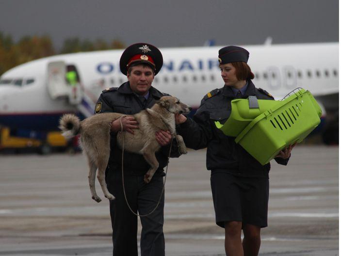 Аэропорт Домодедово за 2014 год перевез более 750 тонн животных