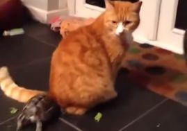 Видео с агрессивной черепашкой, атакующей кота, набирает популярность в интернете