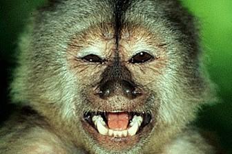 Американские ученые выяснили, что при покупках обезьяны ведут себя разумнее человека