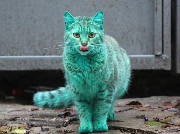 В Болгарии замечен зеленый радиоактивный кот