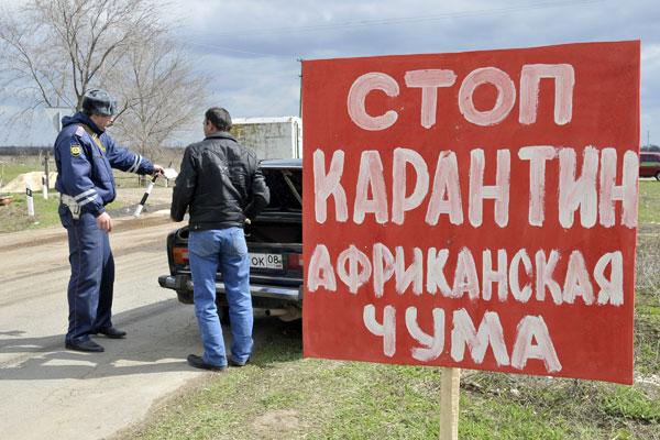 Африканская чума свиней обнаружена в двух областях России
