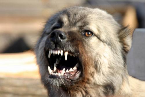 Владельцы собак ответят за смерть девочки в школе-интернате ЯНАО