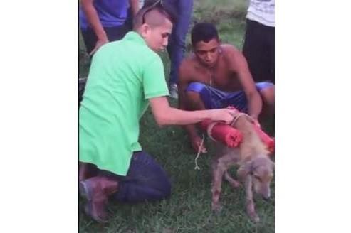 Садисты взорвали собаку с помощью фейерверков