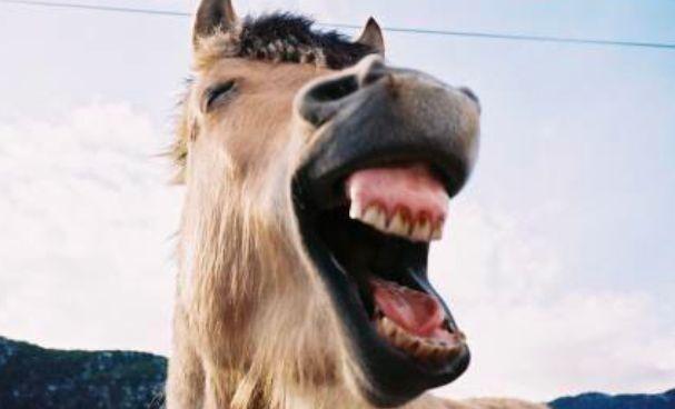 Лошадь покалечила 5 человек на масленичных гуляниях в Ельце