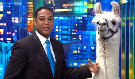 Журналисты телеканала CNN взяли интервью у ламы