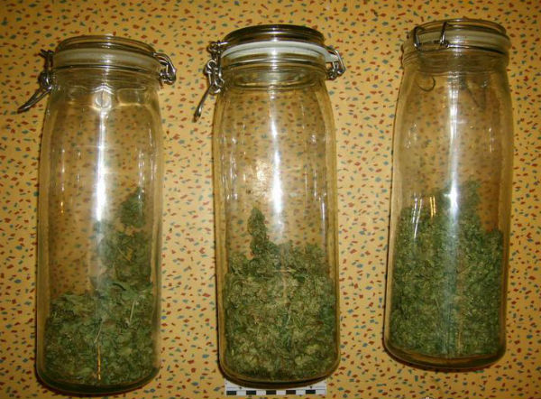 Столичный стилист выращивал в квартире марихуану