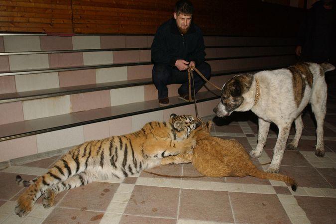 Кадыров призвал мусульман заботиться о животных