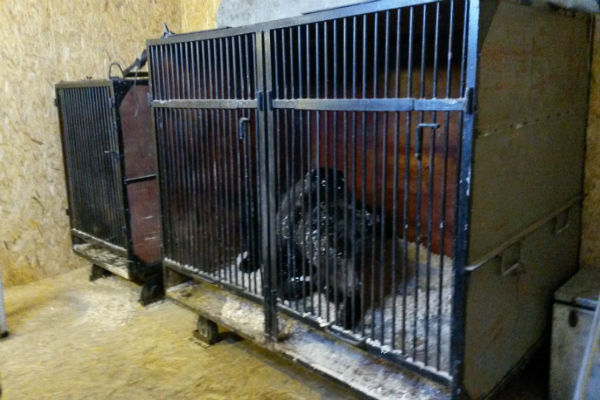 Замерзающих под Волгоградом медведей спасли активисты