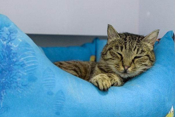 Кошка Матроска из Владивостока станет героиней в телешоу на Первом канале