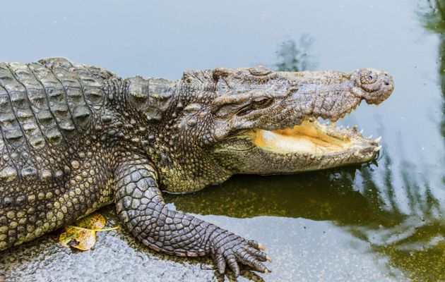Крокодилы в Африке съели браконьера