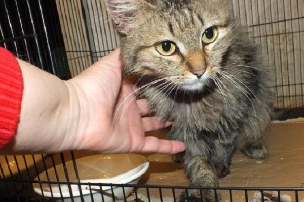 Кошка спасла жительницу Волгограда от ужасной смерти