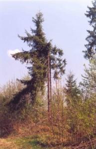 """Поваленные деревья от падения Кореневского метеорита. Фото """"Космпоиска"""""""