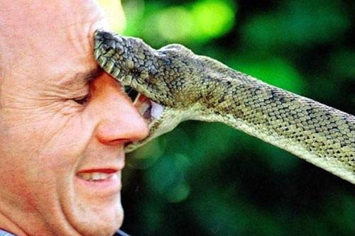 Мужчина госпитализирован после укуса ядовитой змеи в Мурманске