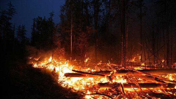 Забайкалье воюет с поджигателями: по факту пожаров возбуждено уже 25 дел