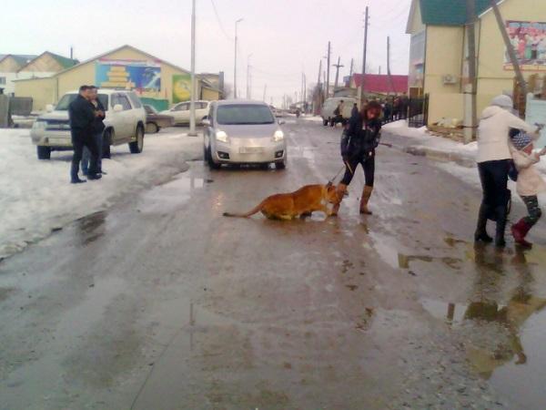 В Якутии цирковая львица напала на ребенка