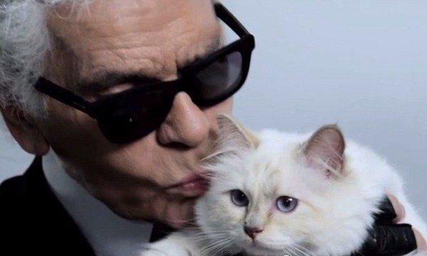 Кошка Карла Лагерфельда заработала в прошлом году 3 млн евро