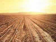 Опасения аграриев сбываются: продукты ЕС могут вернуться в Россию