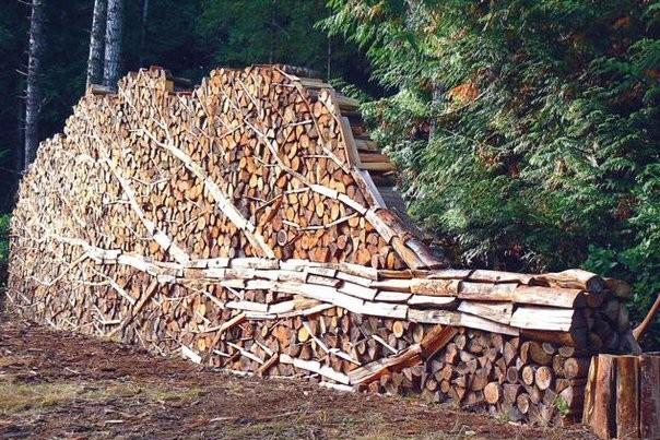 Россия стала лидером по потере лесов