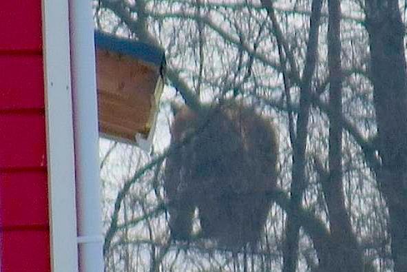 Под Петрозаводском медведь залез во двор частного дома