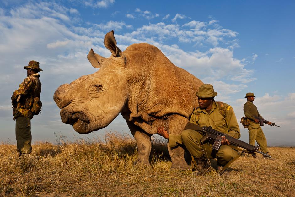 Американский охотник убил носорога, чтобы привлечь внимание к проблеме сохранения видов