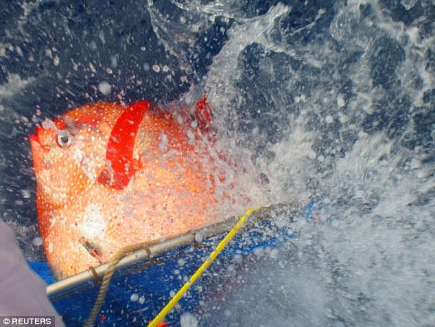Американские ученые обнаружили полностью теплокровную рыбу