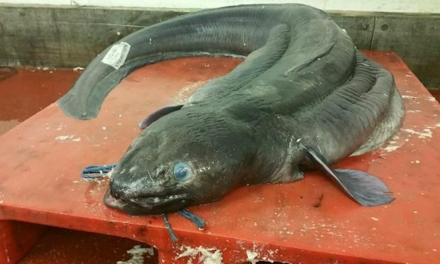 Британские рыбаки поймали монстра из