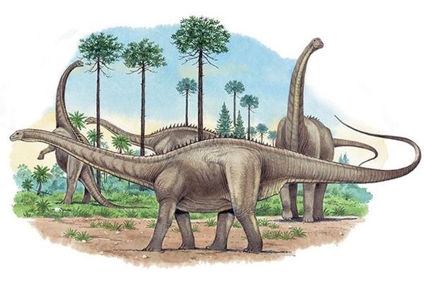 Житель Китая обнаружил окаменелости динозавра мелового периода