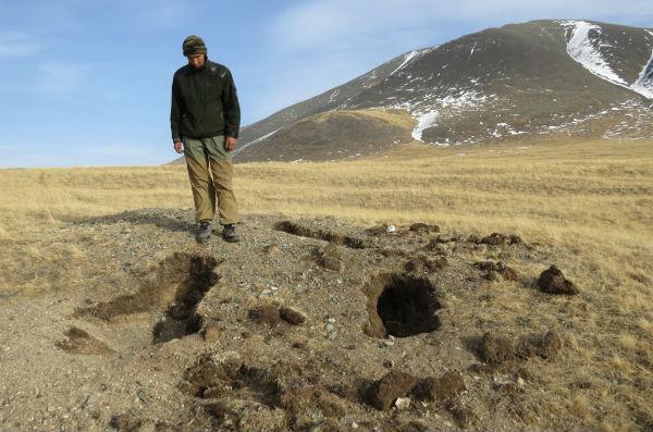На Алтае нашли следы «сайлюгемского» медведя, который 30 лет считался вымершим
