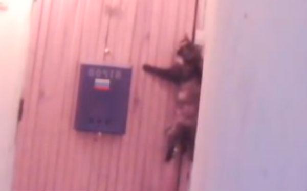 Кошка из Башкирии стала звездой Ютуба, научившись звонить в дверь